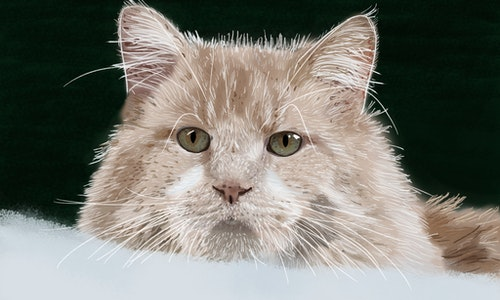 Pet or Animal Portrait